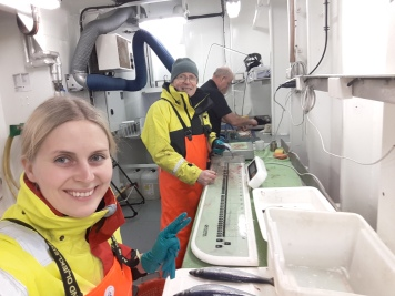 Processing herring samples on the Februrary 2017 herring Spawning cruise.